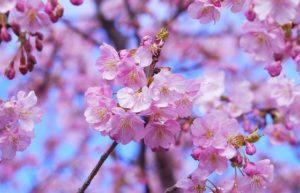 Giappone: scopri il tour virtuale delle iconiche attrazioni