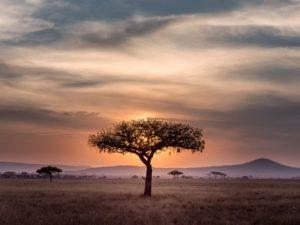 Sud Africa: probabilmente non ci saranno turisti fino al 2021