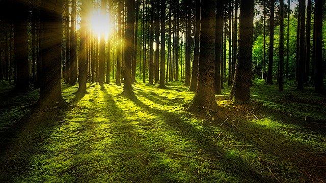 Bloccato in casa? Puoi ascoltare i suoni delle foreste di tutto il mondo!