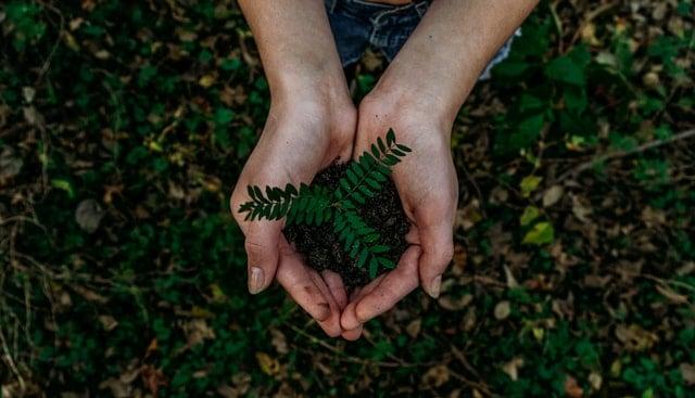 5 giugno 2021: oggi è la 47esima Giornata Mondiale dell'Ambiente