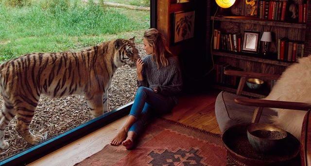 Tiger Lodge nel Kent: l'unico hotel in cui si può dormire con le tigri